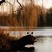 wandeling-3088 © Bart Plessers