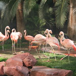 My flamingo friends