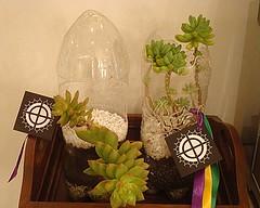 Vaso de Pendurar e de Apoio photo by Vasos Ecológicos