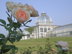 Conservatory with Pink Roses Foreground