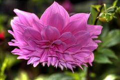 flores-7.jpg