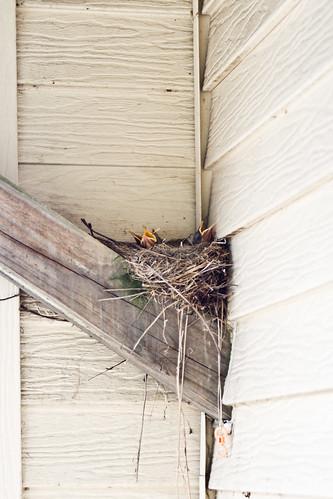 Baby Birds 2