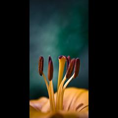 Verticals: Seeds photo by manganite