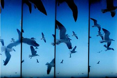 supersampler photo by Tαlish ♥