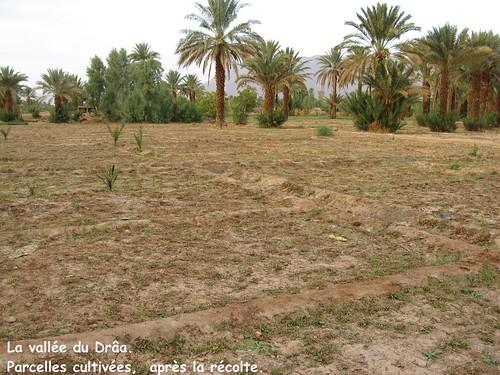 maroc_agriculture