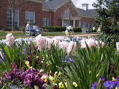 Another Spring View of ELC