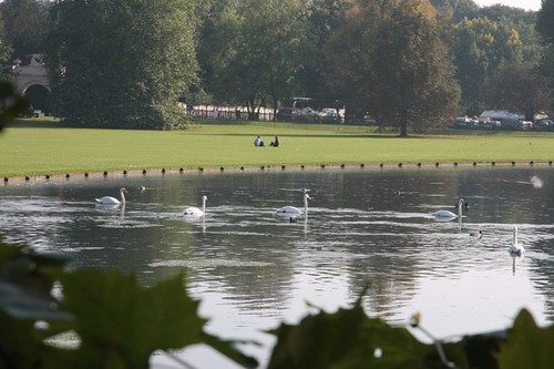 Swans at Audley End