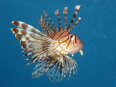 Dangerous Fish photo by Saud ©