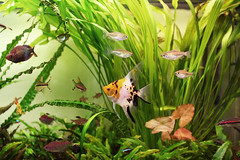 My Aquarium photo by sakichin