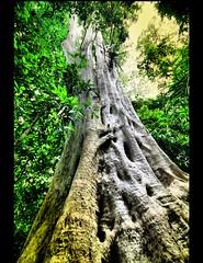 A Walk in The Jungle photo by ! . © Angela Lobefaro . !