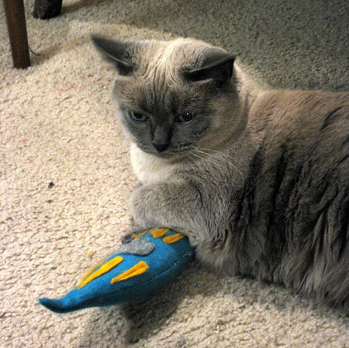 cat and paramecium