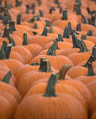 Many Pumpkins photo by Sue Sweet