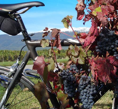 Geneva Vineyards