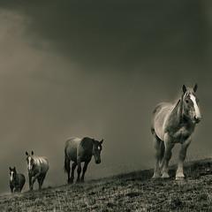 Cavalls al Balandrau by EudaldCJ