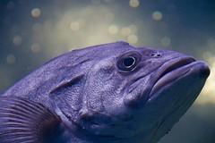 Aquarium Finisterrae - Casa de los Peces. A Coruña photo by Borja Barba