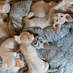 Pile of Kittens photo by peter_hasselbom