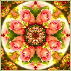 Kaleidoscope Rose (San Valentín Classic) 3109-1 photo by Lucy Nieto