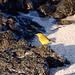 Ecuador and Galapagos-1503 © Bart Plessers