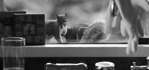 kitchen window visitors