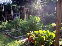 hannas_garden.jpg