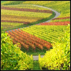 Take a Break from everyday Life in Nature ... Vineyard Fall Colors - Landscape in Germany photo by Batikart
