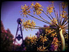 My NZ Garden photo by serenithyme