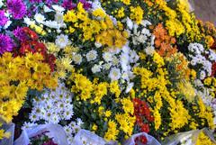 flores-6.jpg
