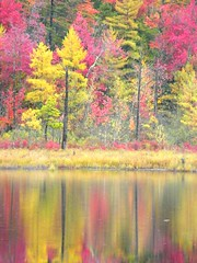 New Hampshire Pink Autumn photo by Stanley Zimny