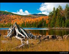 Big Moose Pond photo by Mező, Kornél (mostly away)