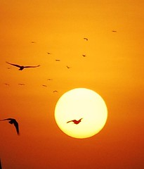 Sunrise photo by Velachery Balu
