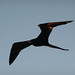 Ecuador and Galapagos-1010127 © Bart Plessers