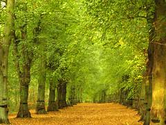 Lime Tree Avenue, Nottinghamshire photo by DaveKav