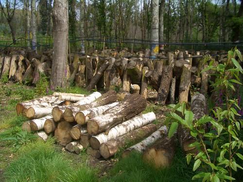 Cultivo de shiitake en Hifas da Terra