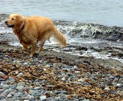 DaisyMae running photo by daisymaebear -