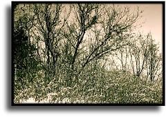 L'hiver sur le versant de la colline...!!! photo by Denis Collette...!!!
