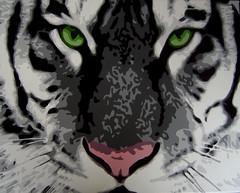 White Tiger 1 photo by mitchthegilmourfan