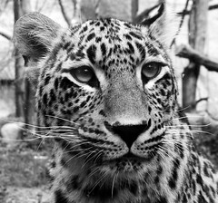 Little kitty photo by Zuzka Grujbárová