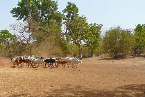 Pays Lobi - Burkina Faso