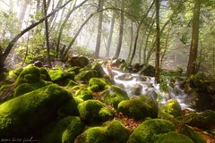 Mossy Boulders, Bridalveil Falls photo by DM Weber