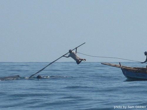 whale hunting statistics. Statistics