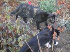 2008_0929_007_kittens