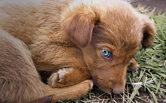 Little Blue Eyes photo by sphaisell