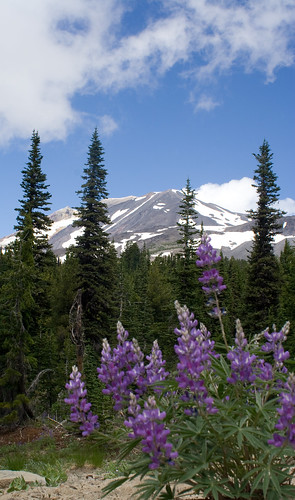spring flowers and mount adams