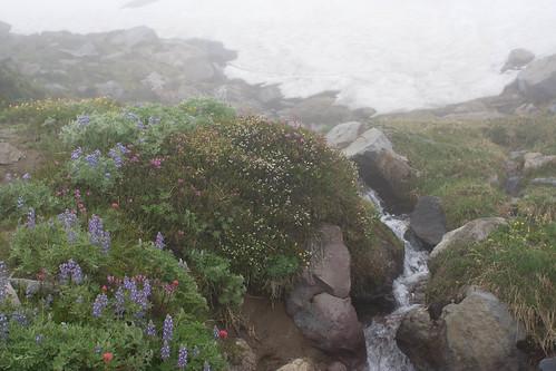snow, stream and wild flowers
