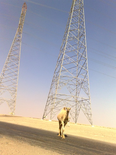 Camel and Powerlines