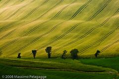 Giugno in Toscana 1 photo by Massimo Pelagagge