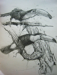 Hornbill 4963 Sketch photo by sia.yekchung 谢一春