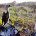 Ecuador and Galapagos-1856 © Bart Plessers