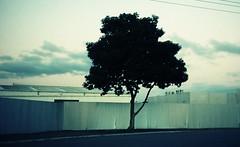 dark tree photo by badjonni
