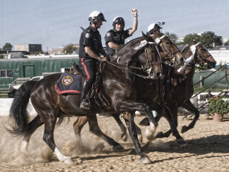 Mounted Police photo by Meerkat Thunderpants